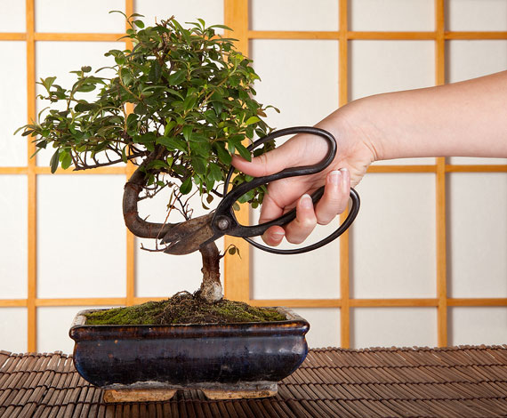 bonsai-schneiden-pflegen