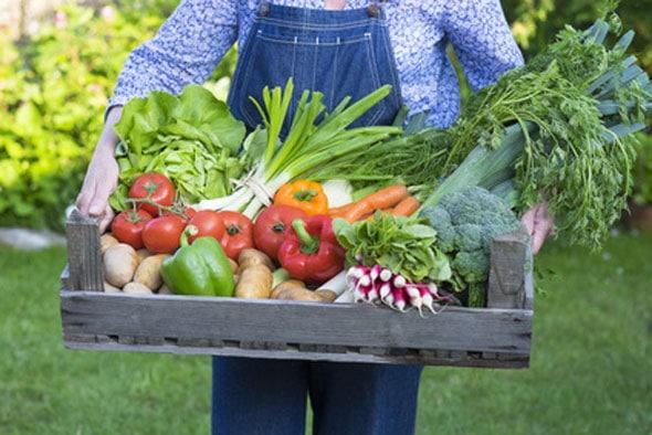 Gartengestaltung ? Drei Stile Im Vergleich Selbstversorger Garten Anlegen Obst Gemuse