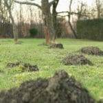 Maulwurfshügel Garten